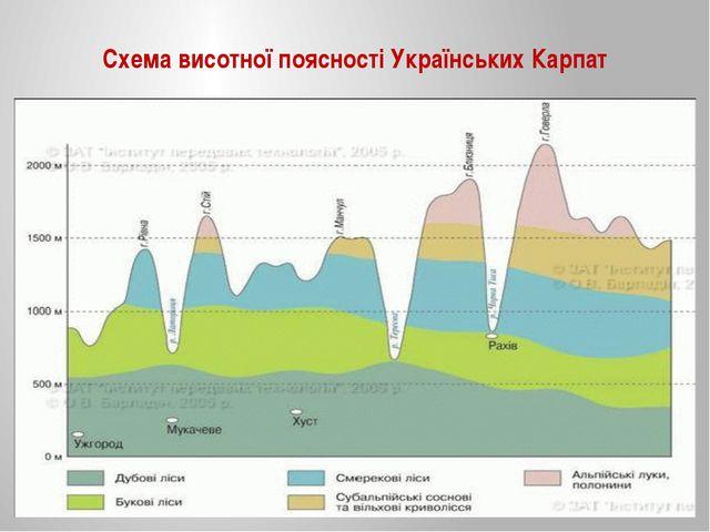 Схема висотної поясності Українських Карпат