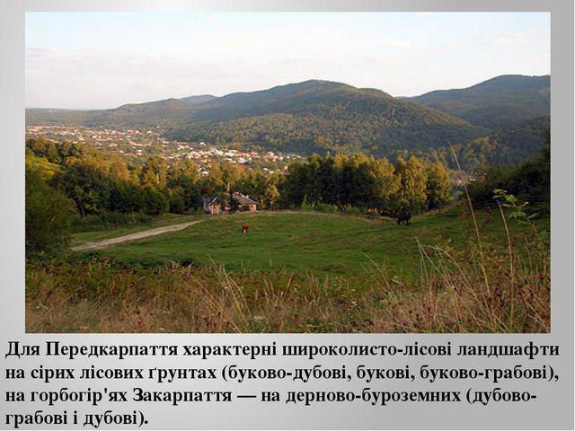 Для Передкарпаття характерні широколисто-лісові ландшафти на сірих лісових ґр...