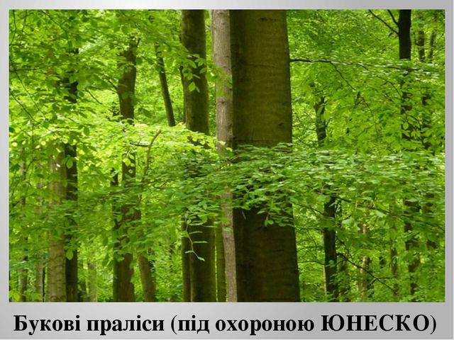 Букові праліси (під охороною ЮНЕСКО)