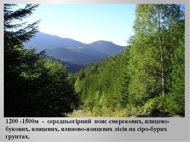1200 -1500м - середньогірний пояс смерекових, ялицево-букових, ялицевих, ялин...