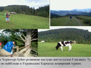 На Чорногорі буйно розвинене пастуше життя (сезон 5 місяців). Тут чи не найбі