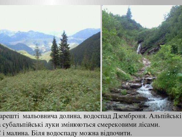 Нарешті мальовнича долина, водоспад Дземброня. Альпійські та субальпійські лу...
