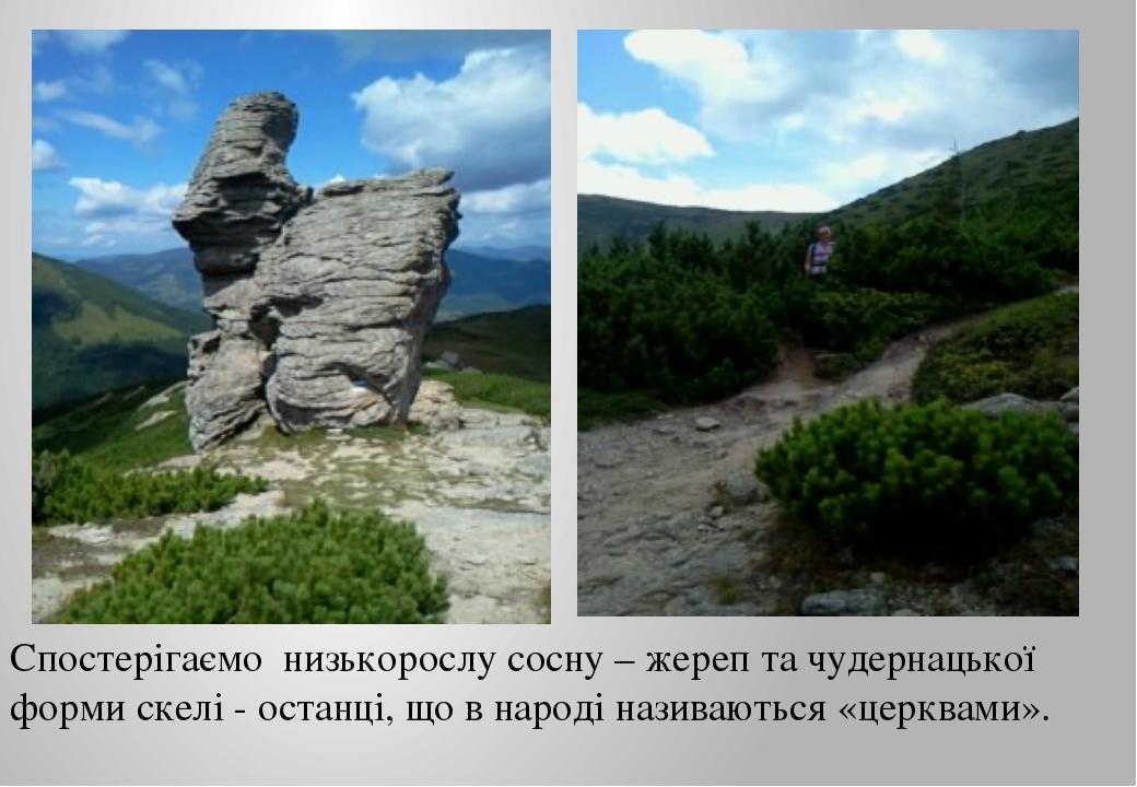 Спостерігаємо низькорослу сосну – жереп та чудернацької форми скелі - останці...
