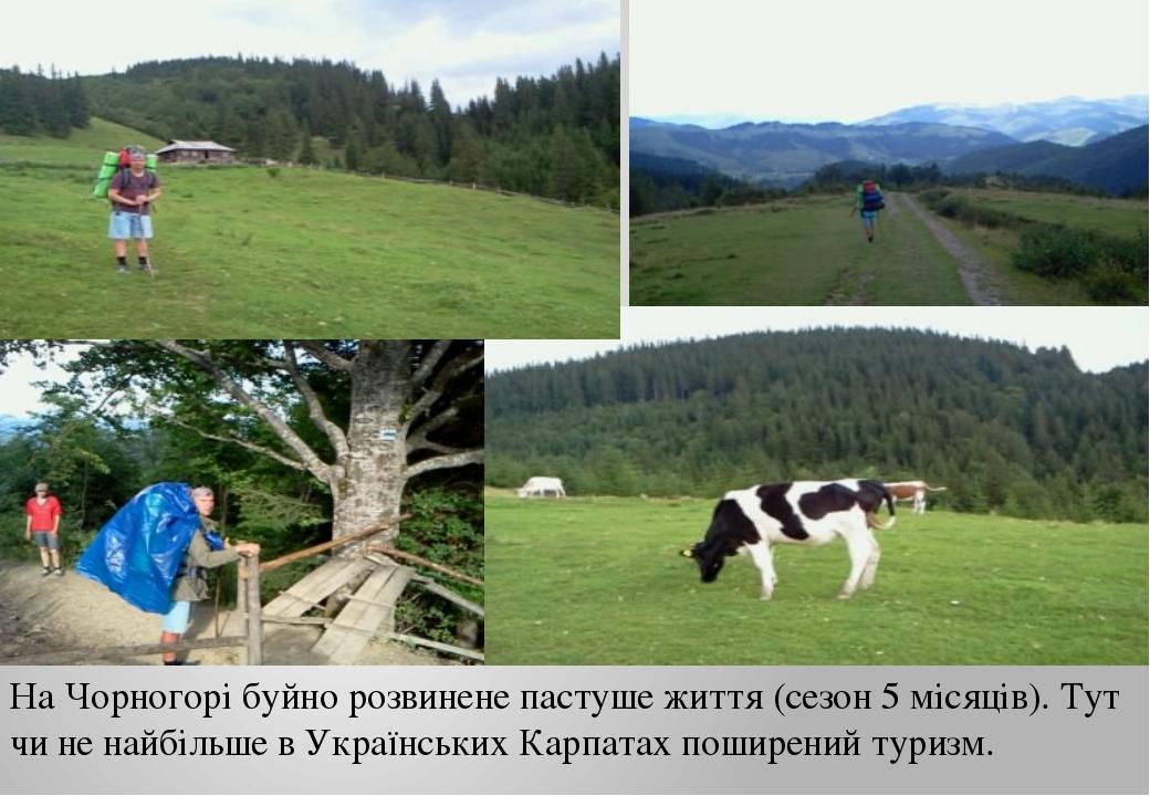 На Чорногорі буйно розвинене пастуше життя (сезон 5 місяців). Тут чи не найбі...