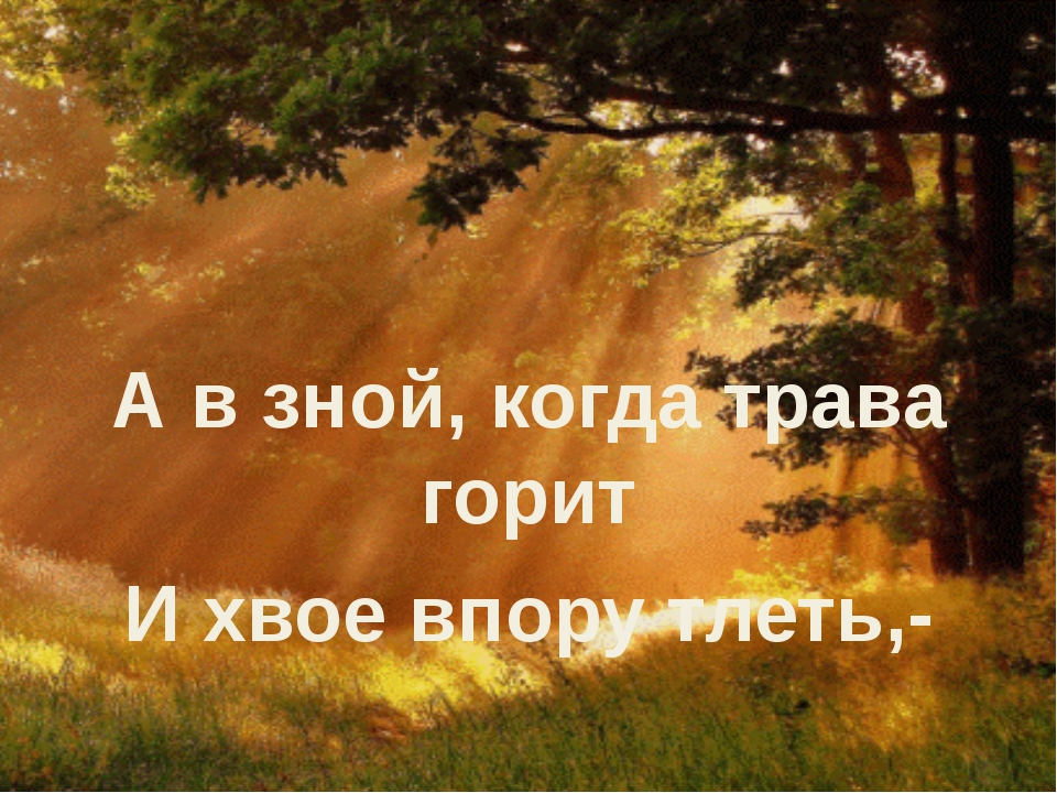 А в зной, когда трава горит И хвое впору тлеть,-