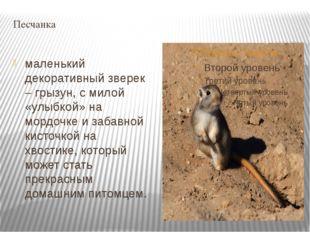 Песчанка маленький декоративный зверек – грызун, с милой «улыбкой» на мордочк