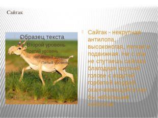 Сайгак Cайгак - некрупная антилопа, высоконогая, легкая и подвижная. Ни с кем