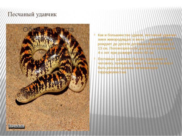 Песчаный удавчик Как и большинство удавов, песчаный удавчик змея живородящая:...