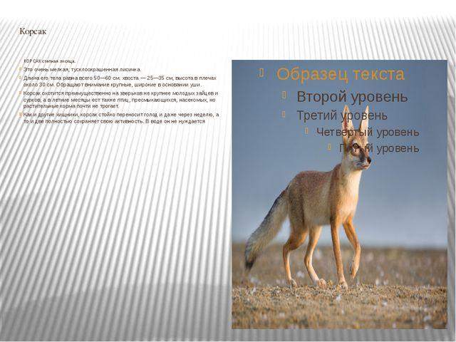 Корсак КОРСАК степная лисица. Это очень мелкая, тусклоокрашенная лисичка. Дли...