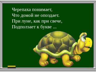 Черепаха понимает, Что домой не опоздает. При луне, как при свече, Подполза