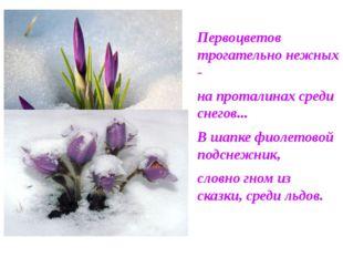 Первоцветов трогательно нежных - на проталинах среди снегов... В шапке фиолет