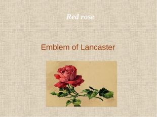 Red rose Emblem of Lancaster