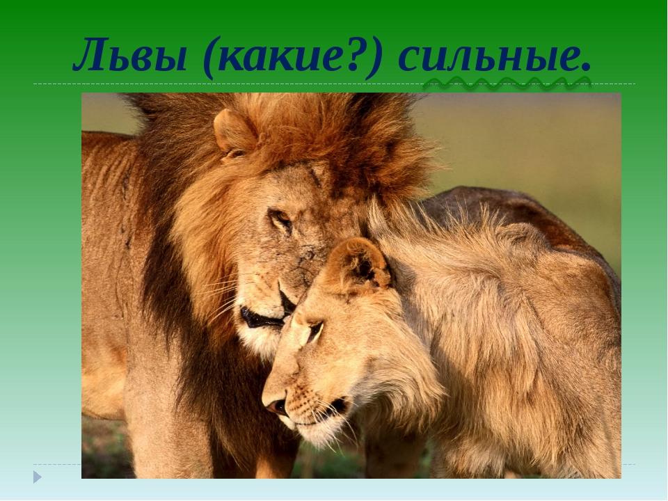 Львы (какие?) сильные.