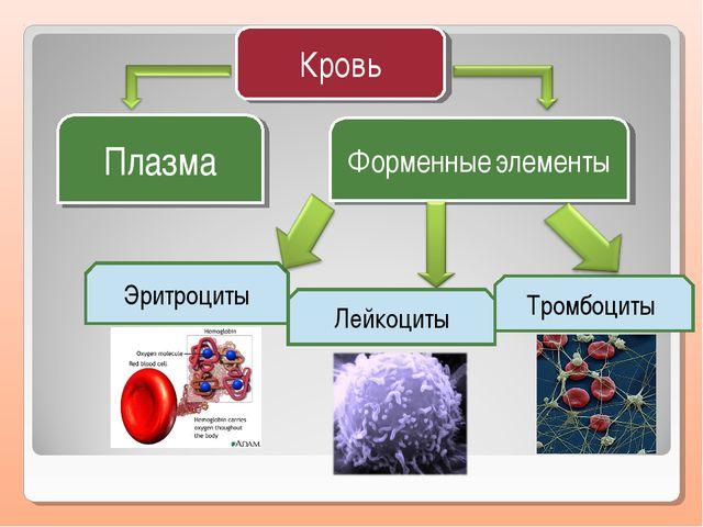 Кровь Плазма Форменные элементы Эритроциты Тромбоциты Лейкоциты