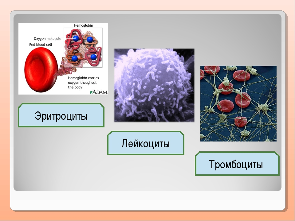 Эритроциты Лейкоциты Тромбоциты