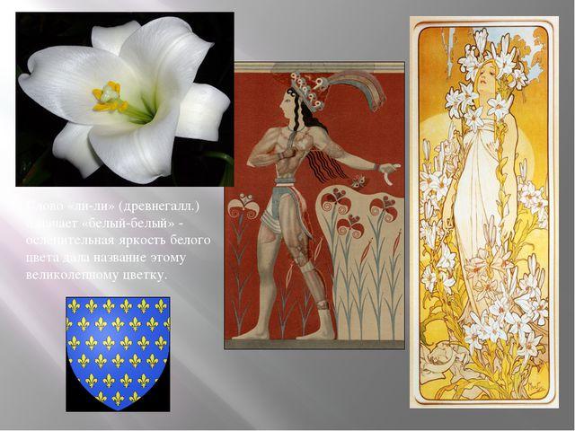 Слово «ли-ли» (древнегалл.) означает «белый-белый» - ослепительная яркость бе...