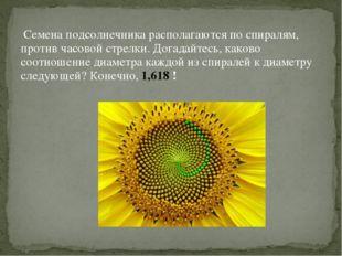 Семена подсолнечника располагаются по спиралям, против часовой стрелки. Дога