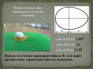 Форма птичьих яиц описывается золотым сечением. Вывод: чем ближе пропорция яй