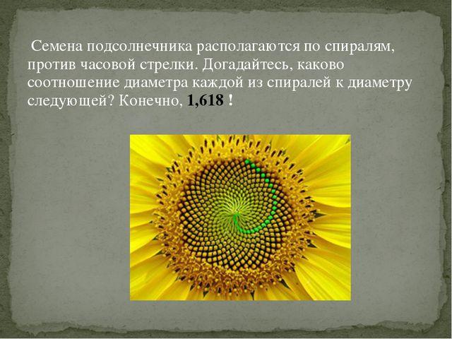 Семена подсолнечника располагаются по спиралям, против часовой стрелки. Дога...
