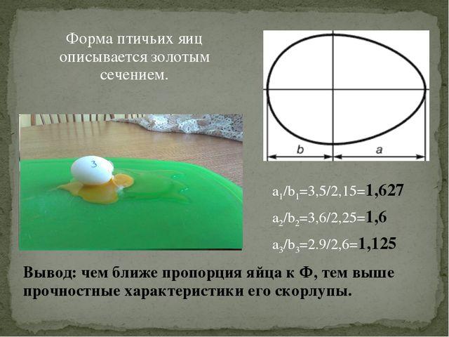 Форма птичьих яиц описывается золотым сечением. Вывод: чем ближе пропорция яй...