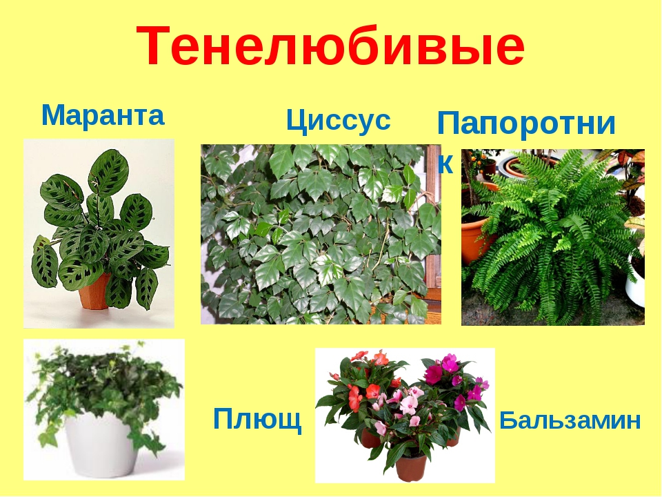 Виды комнатных растений с фото и названиями