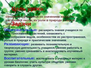 Цель урока: ознакомить учащихся со значением хвойных растений и лесов, их ро