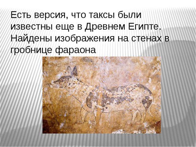 Есть версия, что таксы были известны еще в Древнем Египте. Найдены изображени...