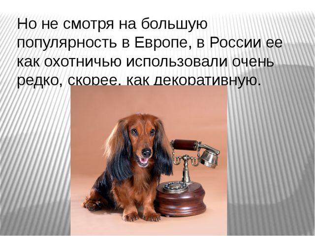 Но не смотря на большую популярность в Европе, в России ее как охотничью испо...