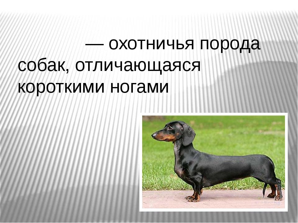 Та́кса— охотничья порода собак, отличающаяся короткими ногами