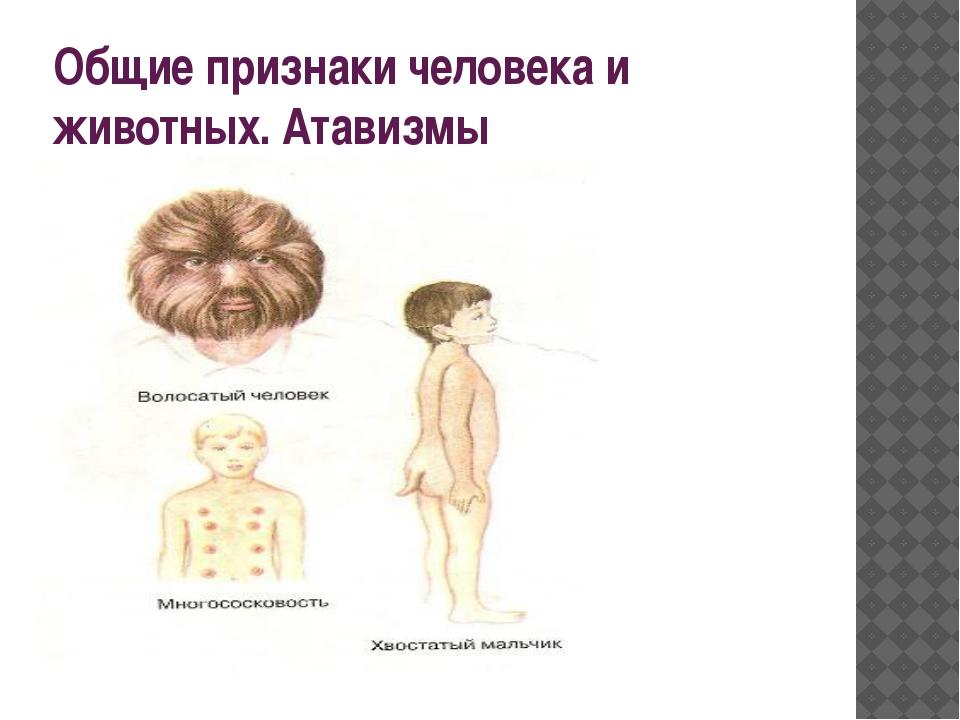 Общие признаки человека и животных. Атавизмы