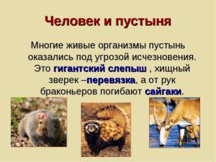 Человек и пустыня Многие живые организмы пустынь оказались под угрозой исчезн