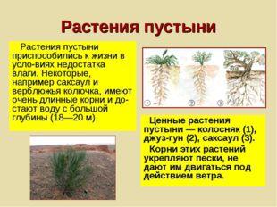 Растения пустыни Растения пустыни приспособились к жизни в условиях недостат