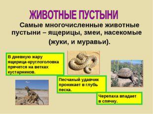 Самые многочисленные животные пустыни – ящерицы, змеи, насекомые (жуки, и мур
