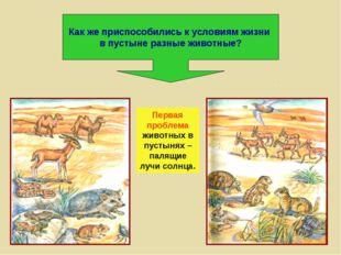 Как же приспособились к условиям жизни в пустыне разные животные? Первая проб
