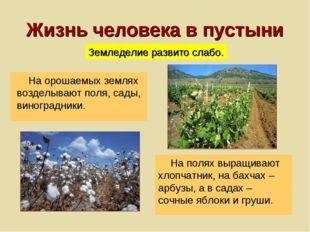 Жизнь человека в пустыни На орошаемых землях возделывают поля, сады, виноград