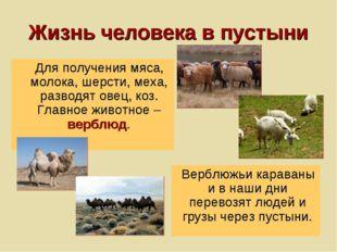Жизнь человека в пустыни Для получения мяса, молока, шерсти, меха, разводят о