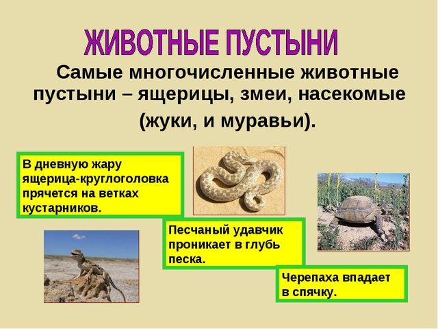 Самые многочисленные животные пустыни – ящерицы, змеи, насекомые (жуки, и мур...