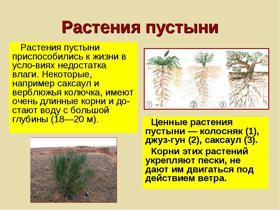 Растения пустыни Растения пустыни приспособились к жизни в условиях недостат...