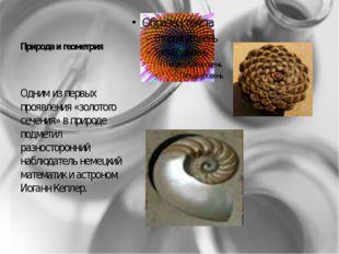 Природа и геометрия Одним из первых проявления «золотого сечения» в природе п