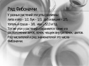 Ряд Фибоначчи У разных растений эти углы различны: липа и вяз – 1/2, бук – 1/