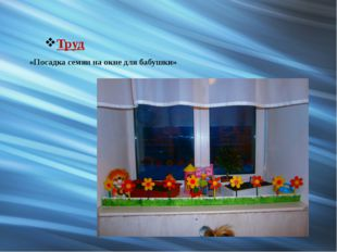 Труд «Посадка семян на окне для бабушки»