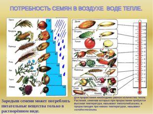 Зародыш семени может потреблять питательные вещества только в растворённом ви