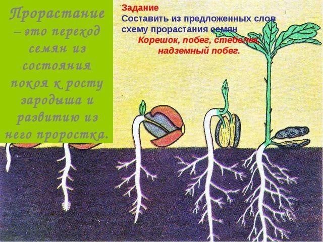 Задание Составить из предложенных слов схему прорастания семян Корешок, побег...