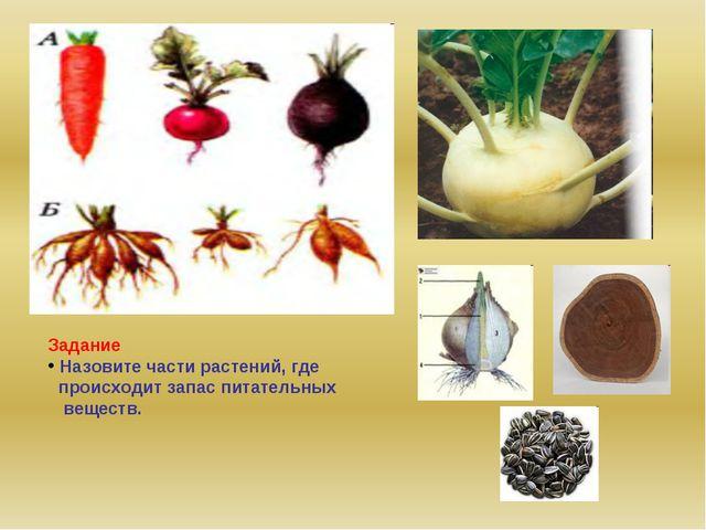 Задание Назовите части растений, где происходит запас питательных веществ.