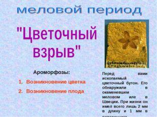 Ароморфозы: Возникновение цветка Возникновение плода Перед вами ископаемый ц