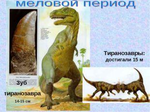 Зуб тиранозавра 14-15 см Тиранозавры: достигали 15 м
