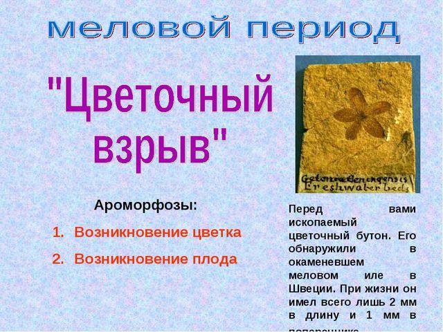 Ароморфозы: Возникновение цветка Возникновение плода Перед вами ископаемый ц...