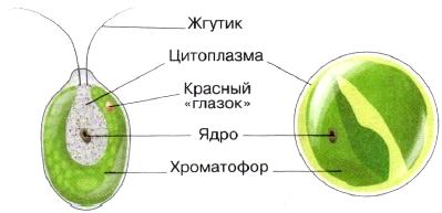 http://www.tepka.ru/biologiya_5/59.jpg