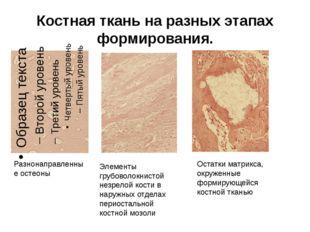 Костная ткань на разных этапах формирования. Разнонаправленные остеоны Элеме