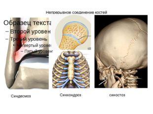 Непрерывное соединение костей Синдесмоз Синхондроз синостоз